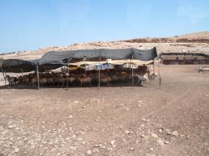 Schafställe mit unterkünften in einem Beduinendorf in der Westbank. Im Hintergrund die Panele einer Solaranlage zur Stromerzeugung